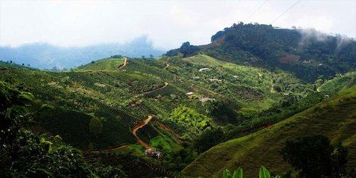 coffee-landscape